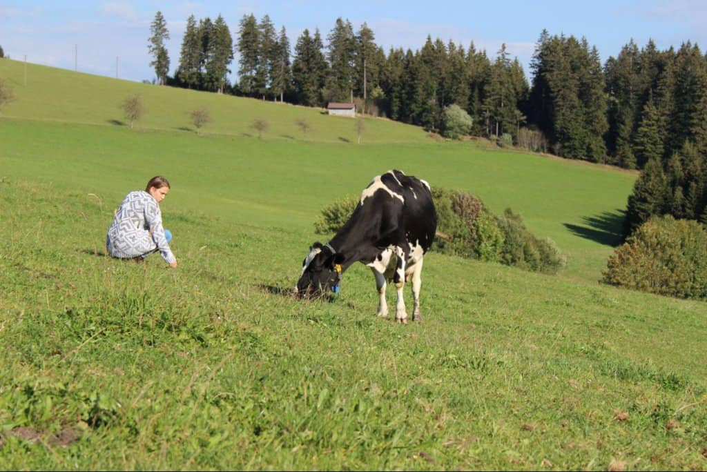 Bio-Landwirtschaft - Bioland Kühe haben wesentlich mehr Platz als Tiere aus Massentierhaltung