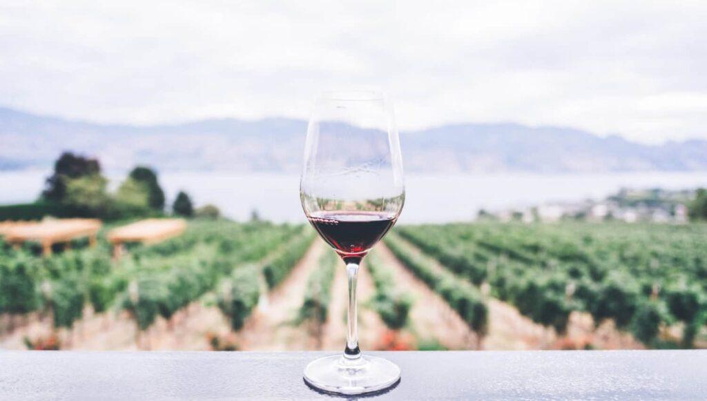 Rotweinglas vor Weinberg